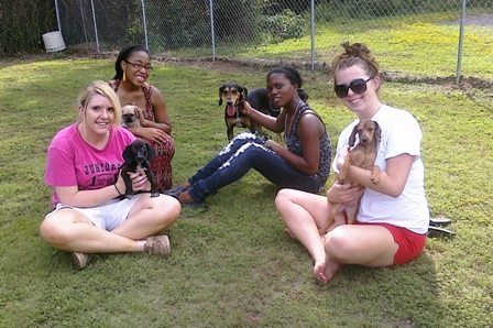 Volunteers with dogs